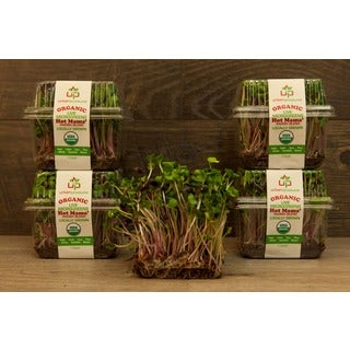 Urban Produce Certified Organic Living Hot Mama Microgreens (Pack of 4)