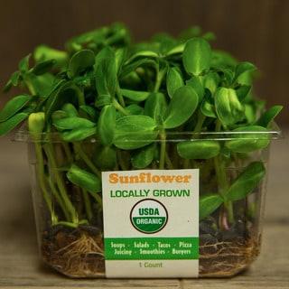 Urban Produce Certified Organic Living Sunflower Microgreens (Pack of 4)