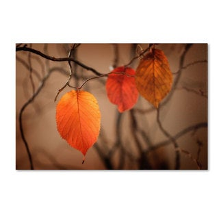 Philippe Sainte-Laudy 'Leaves after Leaves' Canvas Art