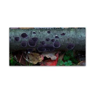 Kurt Shaffer 'Purple Fungi' Canvas Art