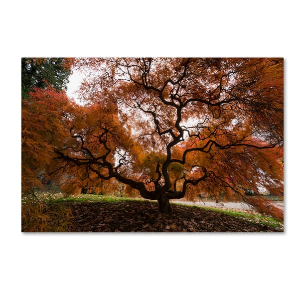 Kurt Shaffer 'Autumn Japanese Maple Tree' Canvas Art - Multi