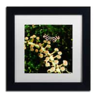 Kurt Shaffer 'Zebra Longwing Butterfly' Matted Framed Art