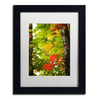 Philippe Sainte-Laudy 'Oak Leaves' Framed Canvas Art