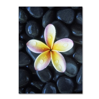David Evans 'Plumeria & Pebbles 3' Canvas Art