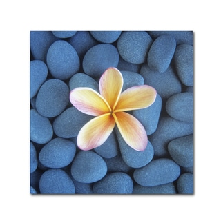David Evans 'Plumeria & Pebbles 6' Canvas Art