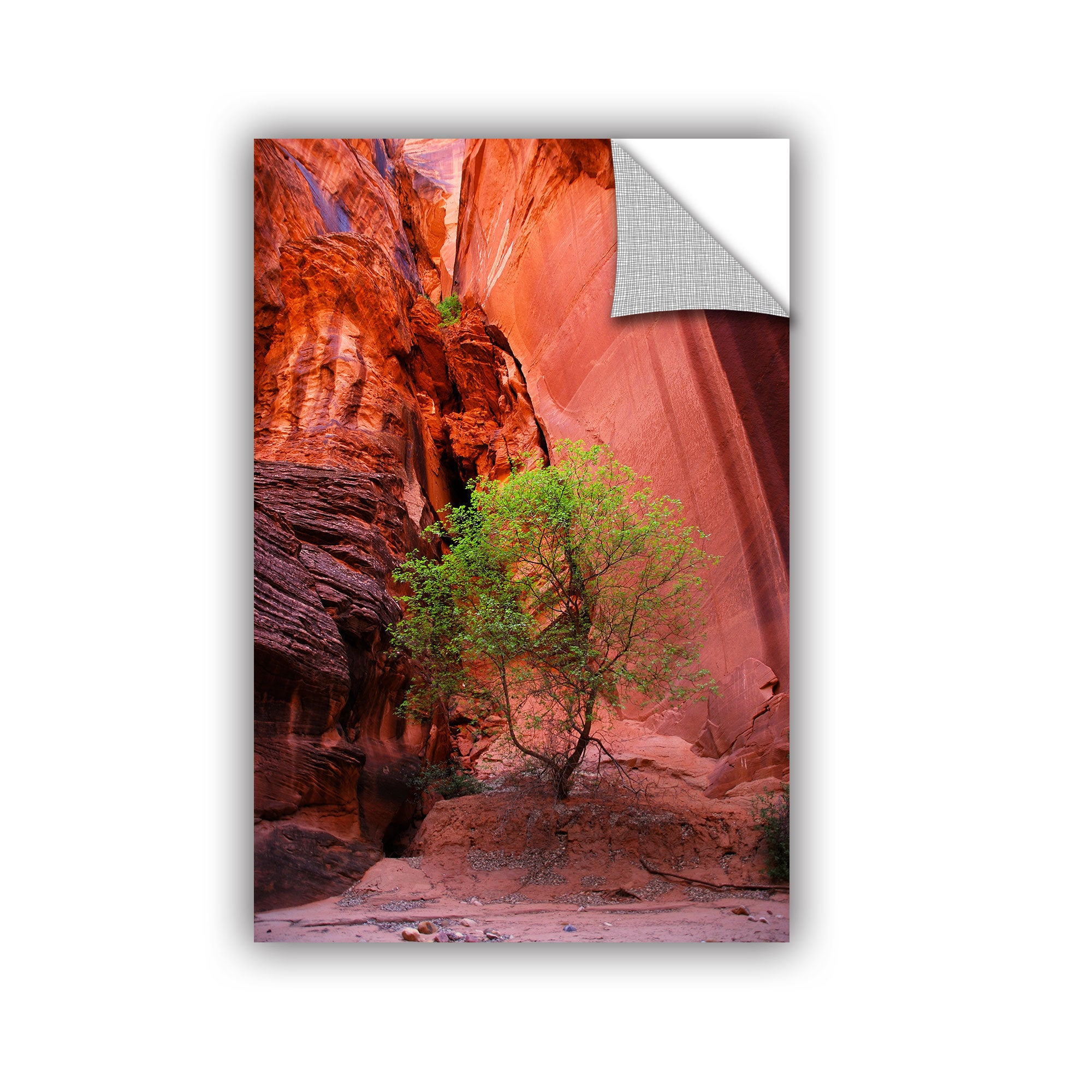 36 by 24-Inch ArtWall Utah-Green Tree Red Canyon Gallery Wrapped Canvas Art by Dan Wilson