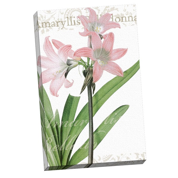 Portfolio Canvas Decor IHD Studio 'Amaryllis Belladonne' Framed Canvas Wall Art