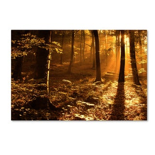 Philippe Sainte Laudy 'Morning Light' Gallery Wrapped Canvas Wall Art