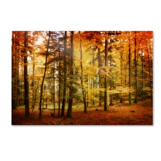 Philippe Sainte-Laudy 'Brilliant Fall Color' Gallery Wrapped Canvas Wall Art