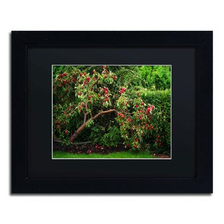 Philippe Sainte-Laudy 'The Apple Tree' Black Framed Canvas Wall Art