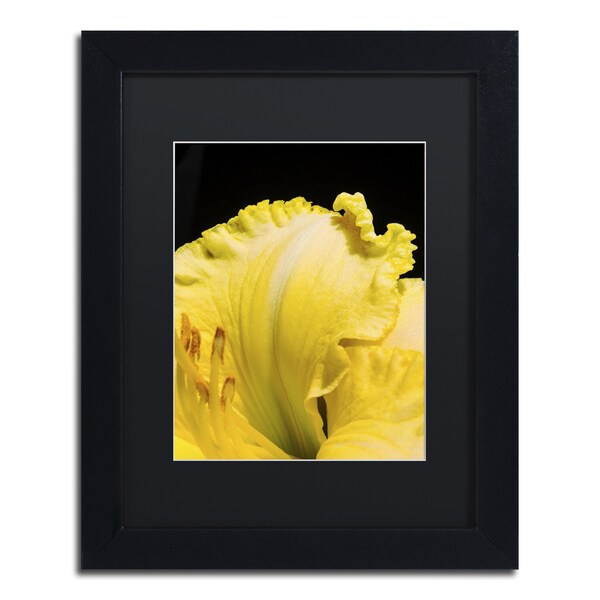 Kurt Shaffer \'Day Lily Abstract\' Framed Canvas Wall Art - Free ...