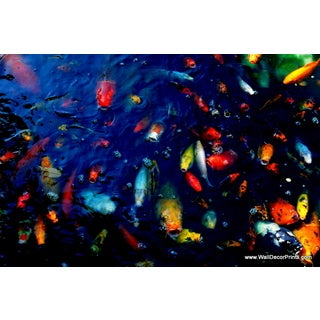 Colorful Fish Print Wall Art