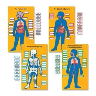 Carson-Dellosa Human Body Bulletin Board Set - 1/PK