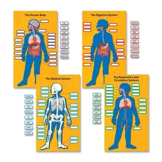 Carson-Dellosa Human Body Bulletin Board Set - 1/PK
