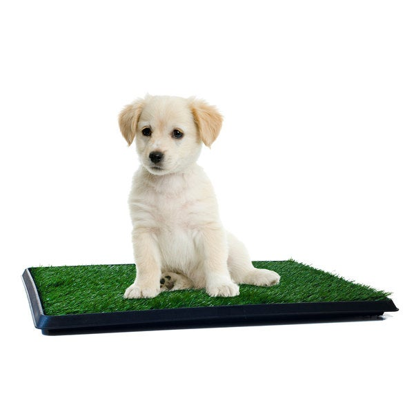Shop Paw Puppy Potty Trainer The Indoor Restroom For Pets
