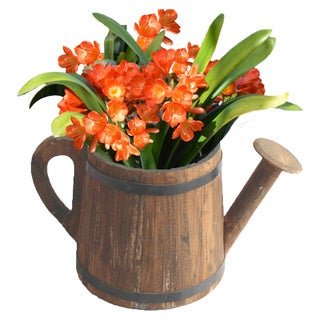 Watering Pail Planter