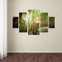 Ariane Moshayedi 'Muir Woods' 5 Panel Art Set