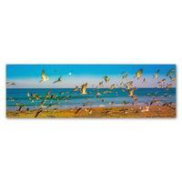 Preston 'Florida Beach Birds' Canvas Art