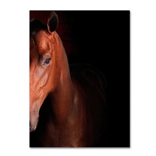 Preston 'Kentucky Horse Intense' Canvas Art