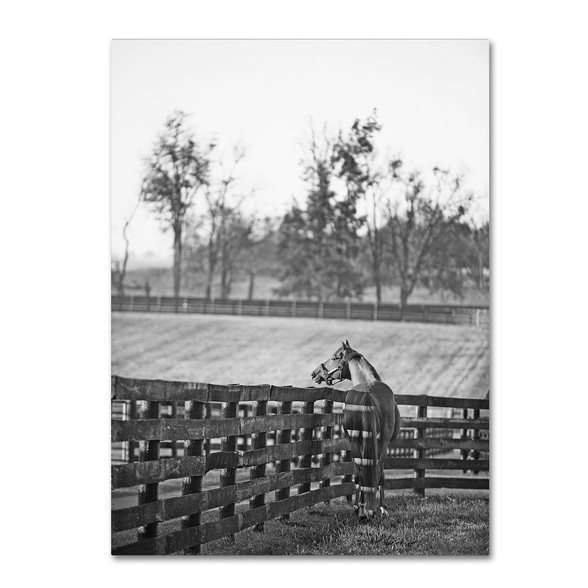 Trademark Preston 'Kentucky Horse Sunrise BW' Canvas Art ...