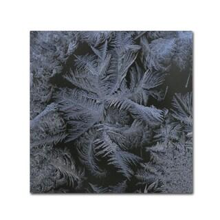 Kurt Shaffer 'Frost Star' Canvas Art