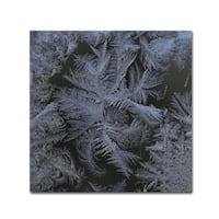 Kurt Shaffer 'Frost Star' Canvas Art - Multi