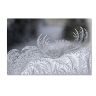 Kurt Shaffer 'February Window Frost' Canvas Art