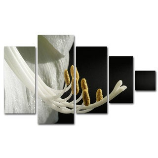 Kurt Shaffer 'Intimate Amaryllis' 5 Panel Art Set
