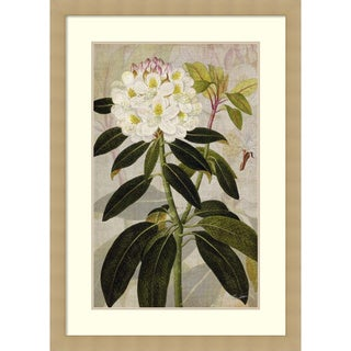 Framed Art Print 'Rhododendron I' by John Butler 30 x 42-inch