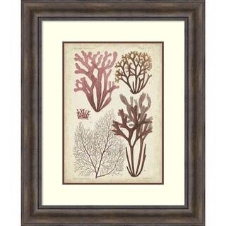 Vision Studio 'Seaweed Specimen in Coral II' Framed Art Print 27 x 33-inch