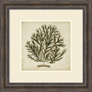 Framed Art Print 'Vintage Seaweed I' by Georg C. Oeder 30 x 30-inch