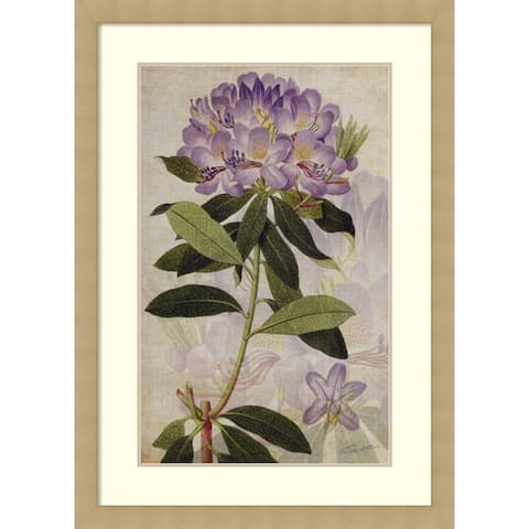 Framed Art Print 'Rhododendron II' by John Butler 30 x 42-inch