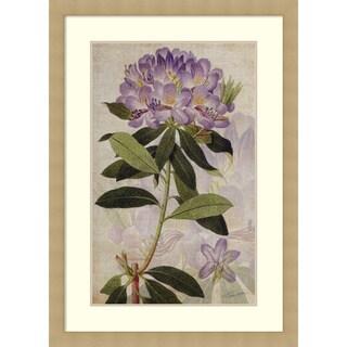 Framed Art Print 'Rhododendron II' by John Butler 30 x 42-inch
