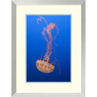 Suzi Eszterhas 'Purple-striped Jellyfish, Monterey Bay Aquarium, California' Framed Art Print 20 x 26-inch