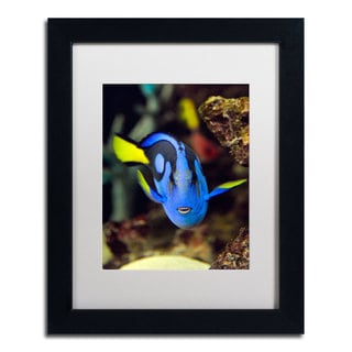 Kurt Shaffer 'Parrot Fish' White Matte, Black Framed Wall Art