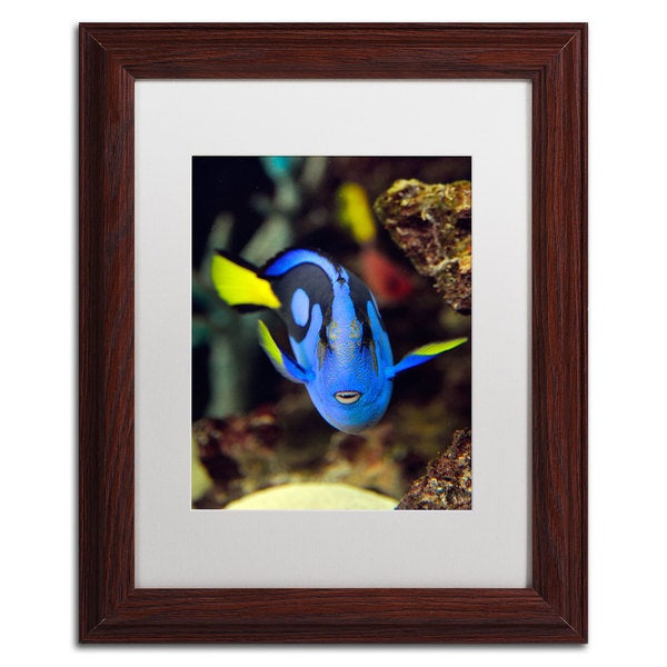 Kurt Shaffer 'Parrot Fish' White Matte, Wood Framed Wall Art