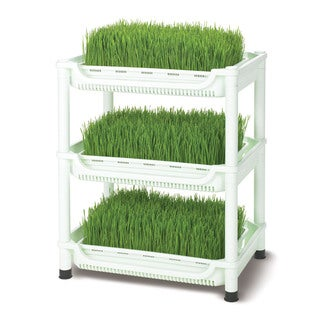 Tribest Sproutman SM-350 Soil-Free Wheatgrass Grower