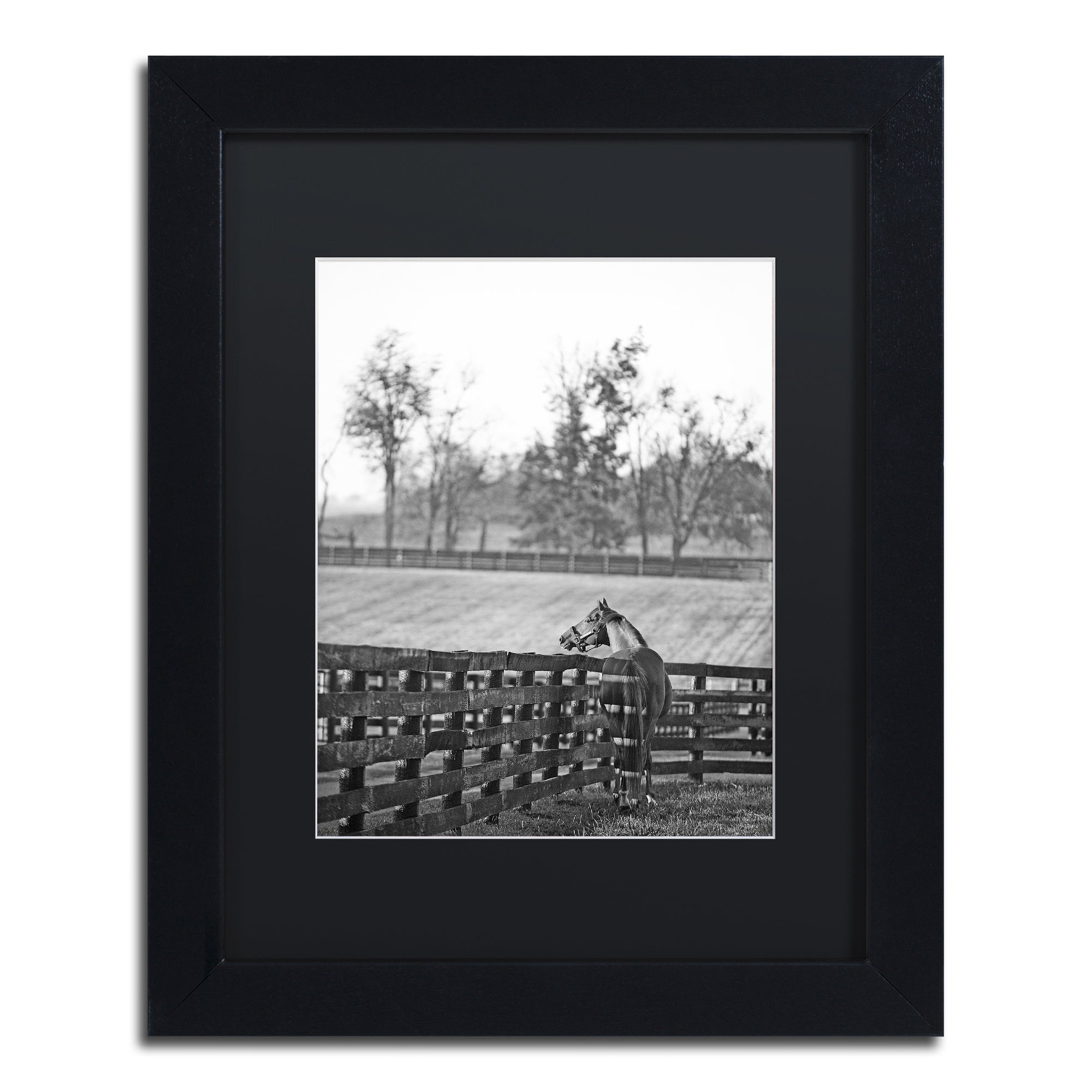 Trademark Preston 'Kentucky Horse Sunrise BW' Black Matte...