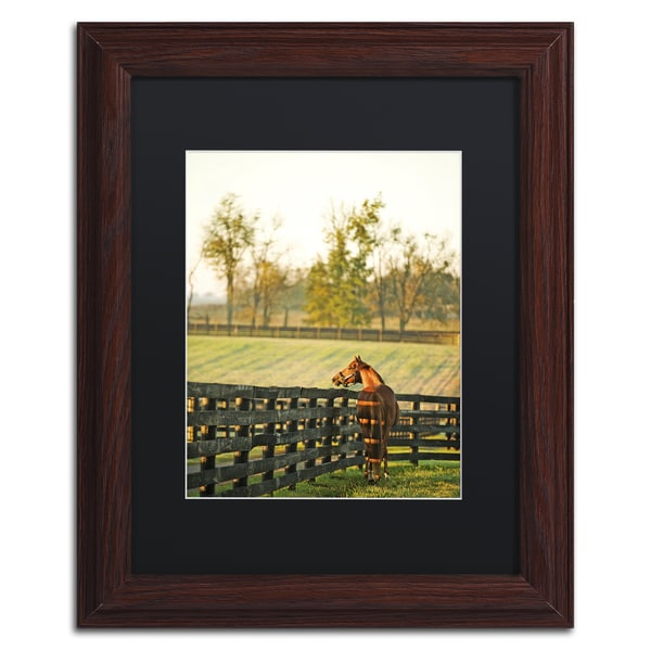 Wall Art Black Horse : Preston kentucky horse sunrise black matte framed