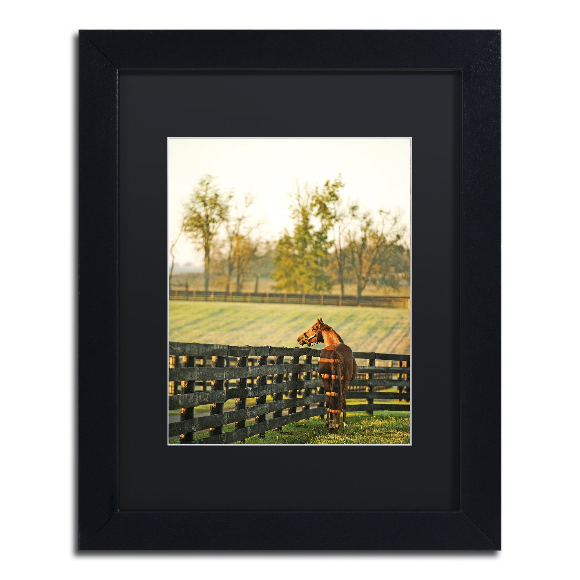 Trademark Preston 'Kentucky Horse Sunrise' Black Matte, W...