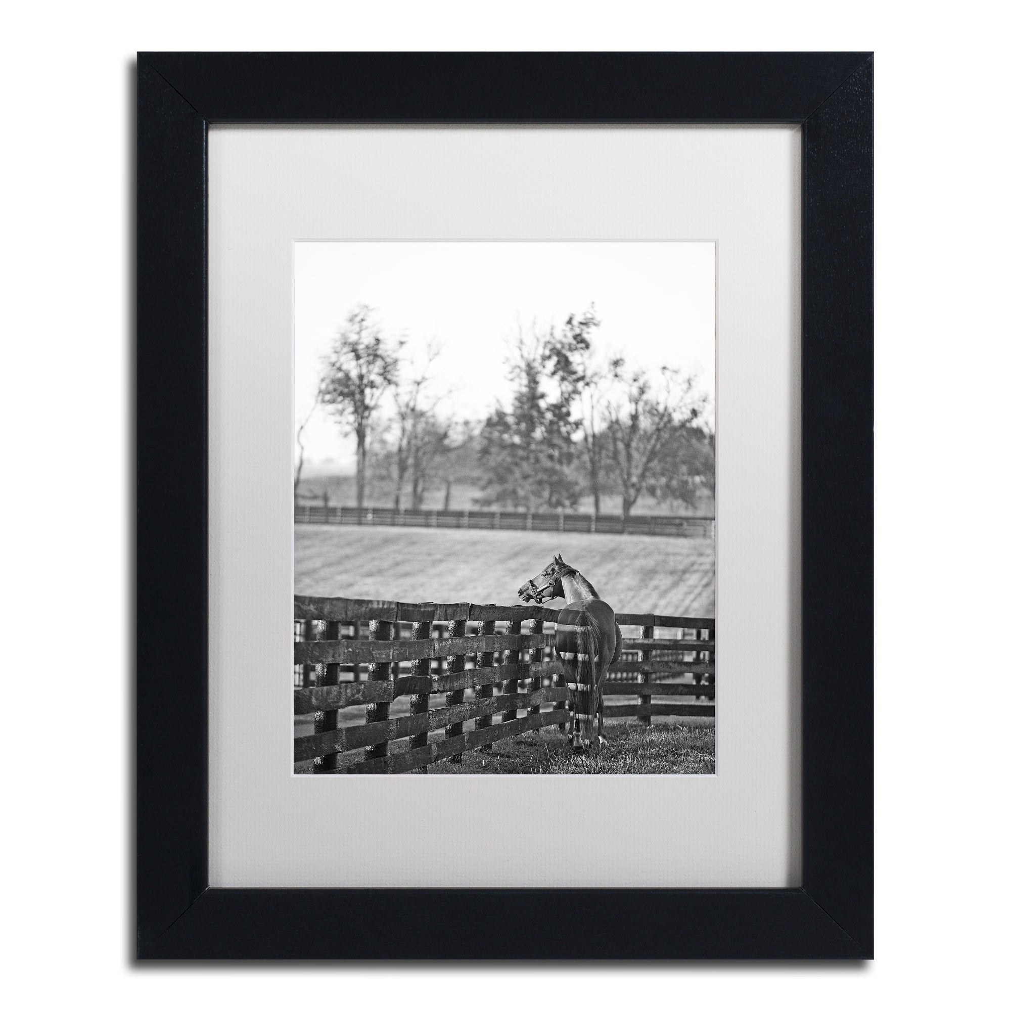 Trademark Preston 'Kentucky Horse Sunrise BW' White Matte...
