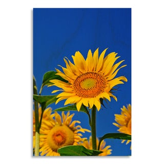 Gallery Direct 'Beautiful sunflowers against a blue background'