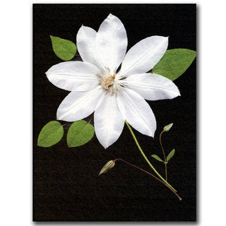Kathie McCurdy 'Star' Canvas Wall Art