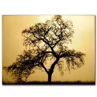 Coleen Proppe 'Pacific Oak' Canvas Wall Art