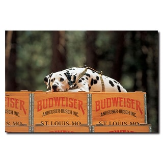 Budweiser 'Clydesdale Dalmation Resting on Budweiser Case' Canvas Wall Art