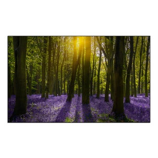 Gallery Direct 'Sunlight casts shadows across bluebells in the wood' Mounted Metal