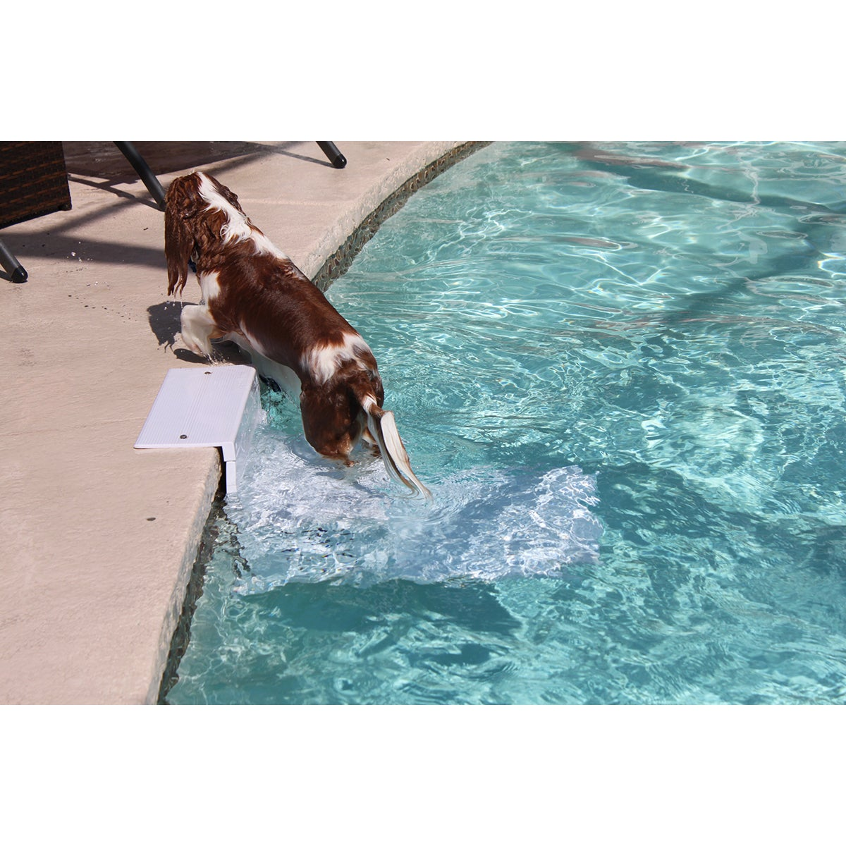 PoolPup Steps4 To 150 lbs (4 To 150 lbs), Blue pool