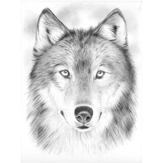 Sketching By Number Kit 8inX12inWolf