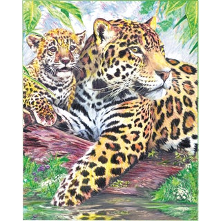 Color Pencil By Number Kit 8.75inX11.75inJaguar Family