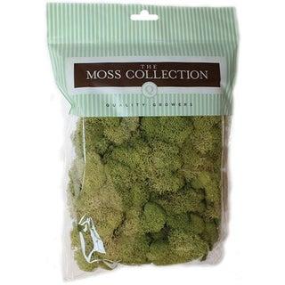 Preserved Reindeer Moss 108.5 Cubic InchesSpring Green